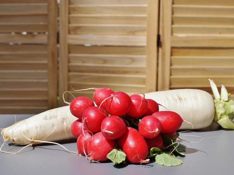 Rettich und Radieschen – verschmähtes Gemüse mit viel Potenzial