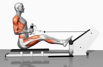 5 Best Exercises for Back seated rows