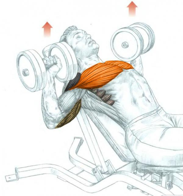 Incline Dumbbell Bench Press Bodybuilding Wizard