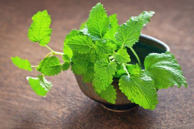 erva cidreira é um dos alimentos naturais para dar mais disposição