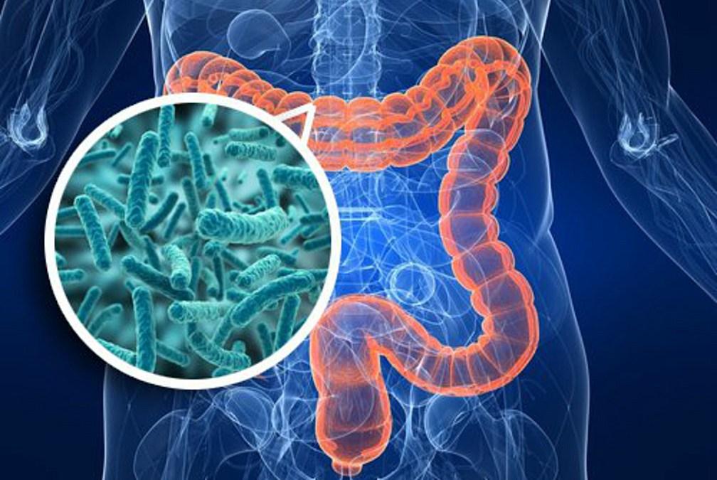 The Silent Microbiome Crisis | BodyFitSuperstore.com