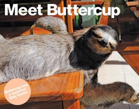 buttercup-1_3261483a