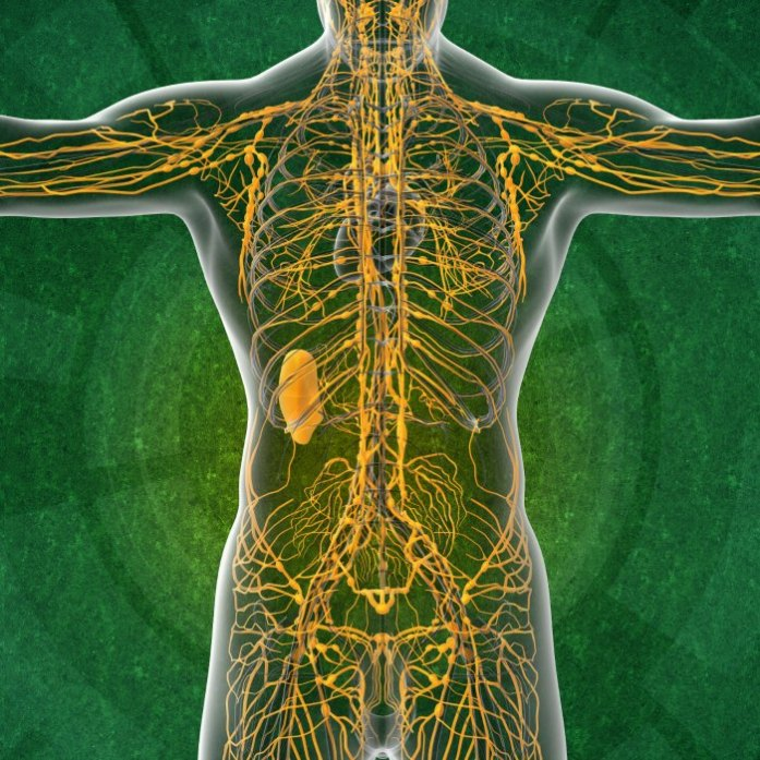 Manual Lymph Drainage - Body Harmony Physical Therapy