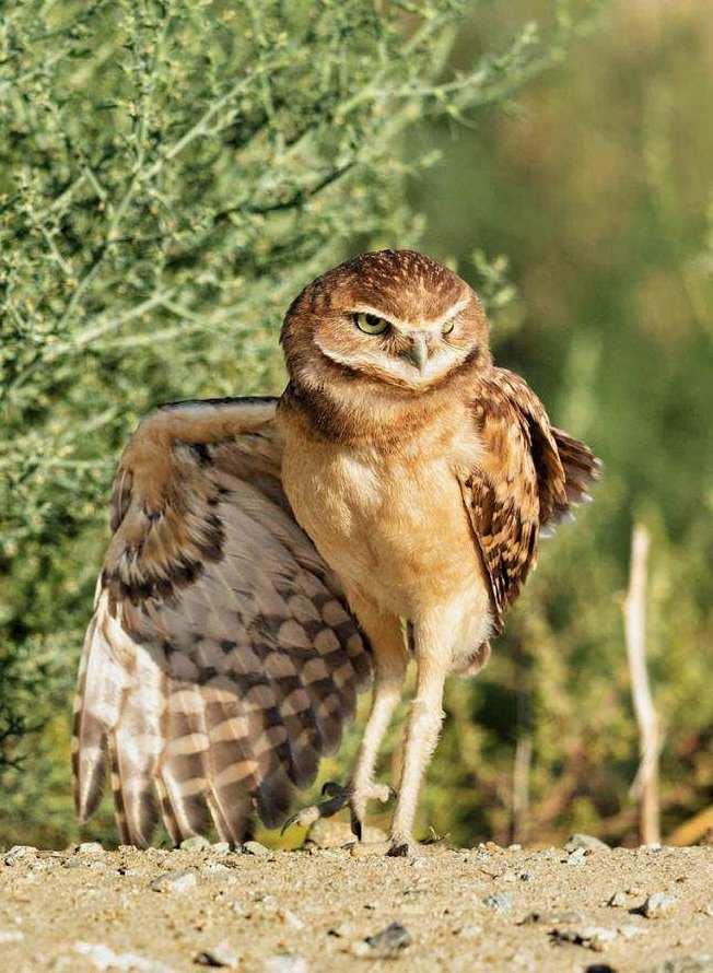 owl legs