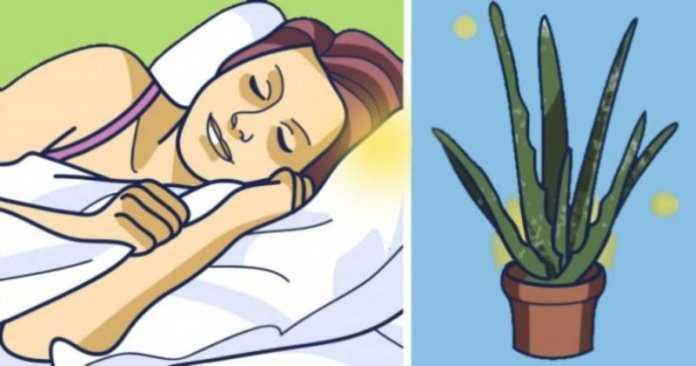bedroom-plants-to-help-you-sleep-better