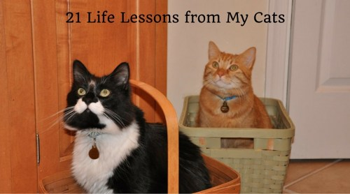 21-life-lesson-from-my-cats