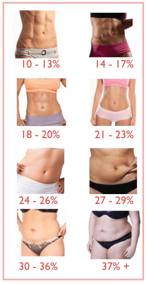 The ideal body fat percentage to bulk - Stijn van Willigen Personal
