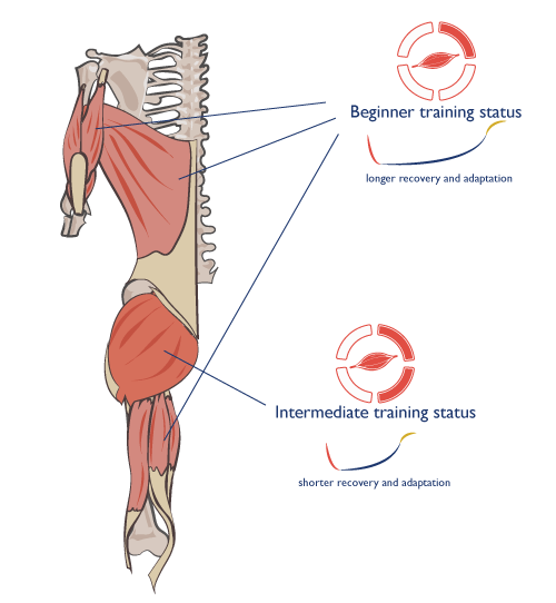 image_anatomy-training-status-difference