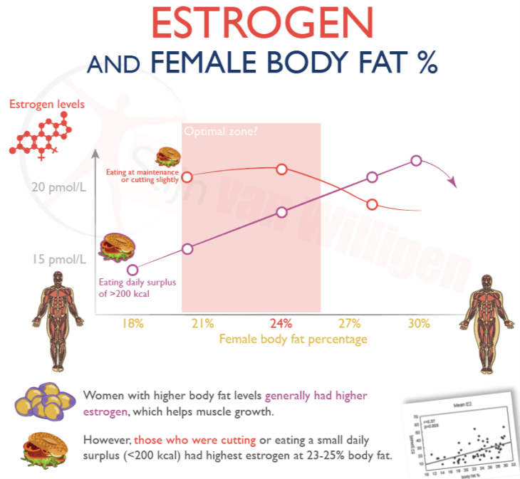 since estrogen peaks around 25-27% body fat during a caloric deficit (a  cut) (tap), women may want to stop their bulk before they reach this body  fat level