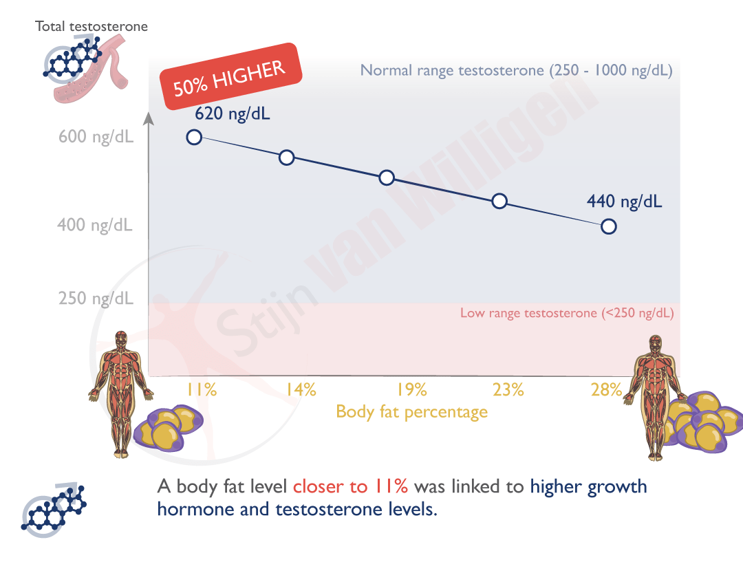 img-bodyfat-testosterone-level