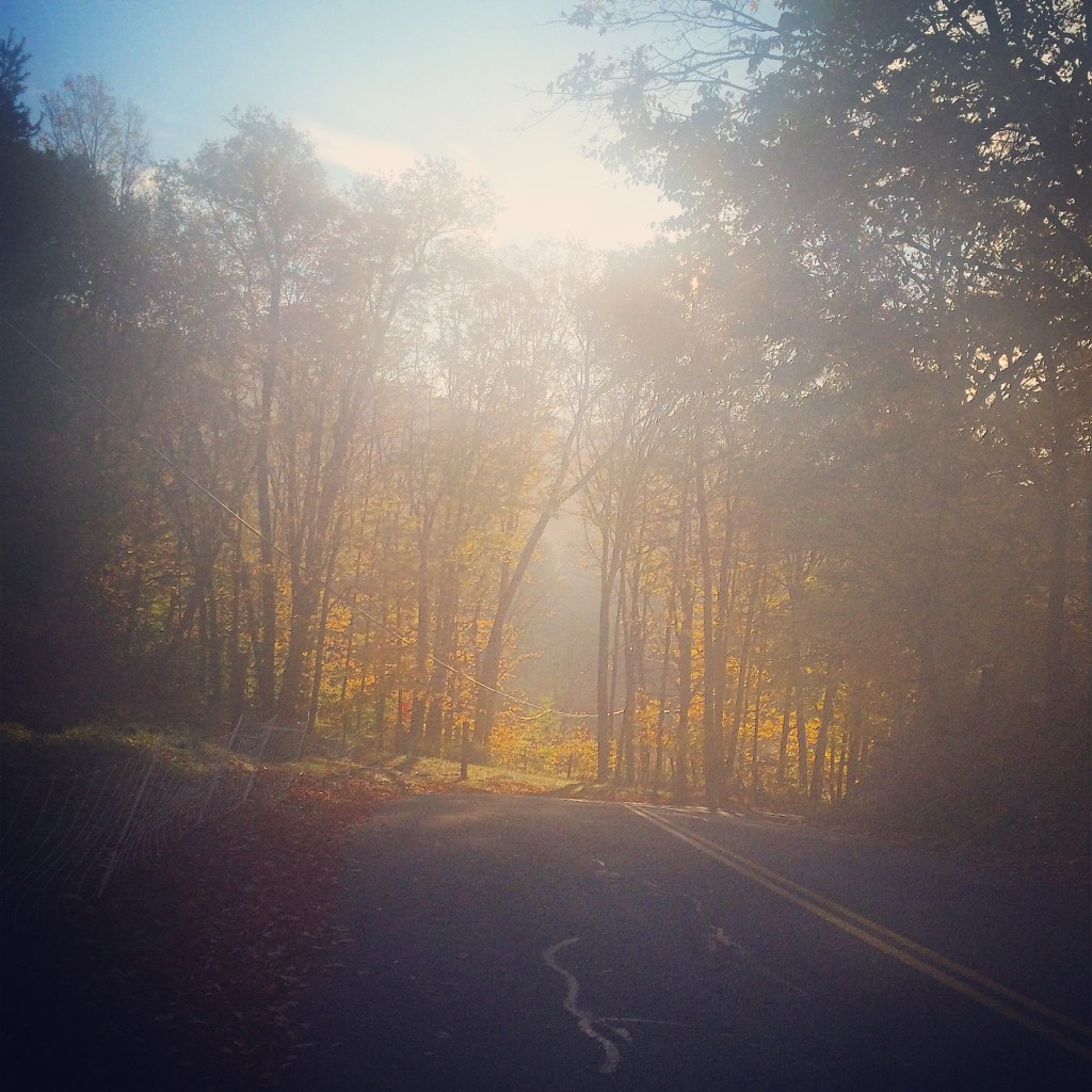 Image of a foggy road stretching into the distance, cutting between 2 rows of trees