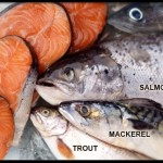 omega-3-s15-photo-of-assortment-of-fish