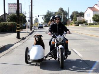 Dierenfilmfestival hond met motor