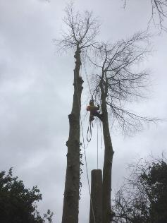 boom-verwijderen1