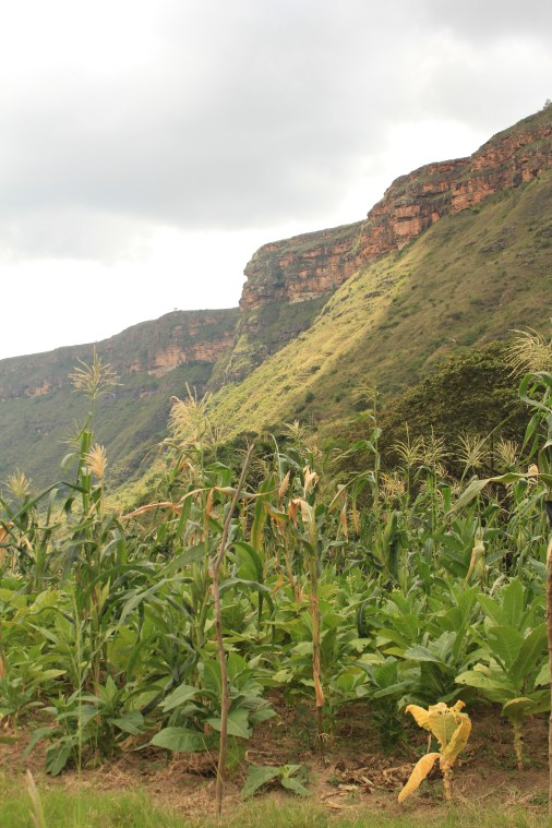 Agriculture in the bottom of the canyon