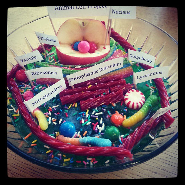 Model of a cell in Jello with candy, 2013