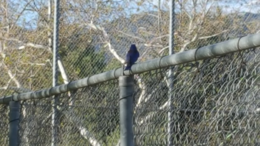 This brightly colored bird buzzed me on his way to perch.