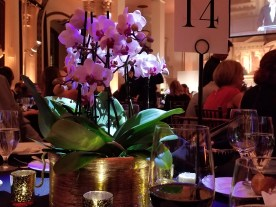 A purple orchid with about 20 blooms lit from above with special lighting