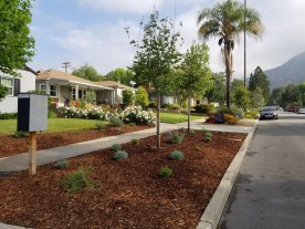 View up the street featuring two new crepe myrtle trees