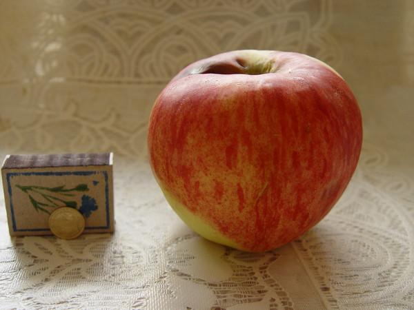 Яблоки Апорт: описание сорта, правила посадки и ухода ...
