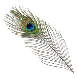 Bg Peacock Full Eye Tails Fly Tying Materials Feathers