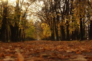 Parcul Cemtral Cluj-Napoca - Noiembrie 2010