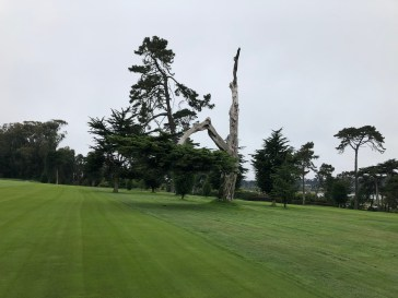 """The course has many unique old trees, including this kind of upside down one the members call the """"F-U"""" tree."""