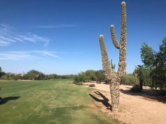 """15th approach with one of the more """"abused"""" saguaros I've ever seen."""
