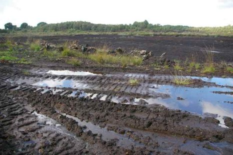 Lindow Moss in 2006 (Wikimedia Commons)