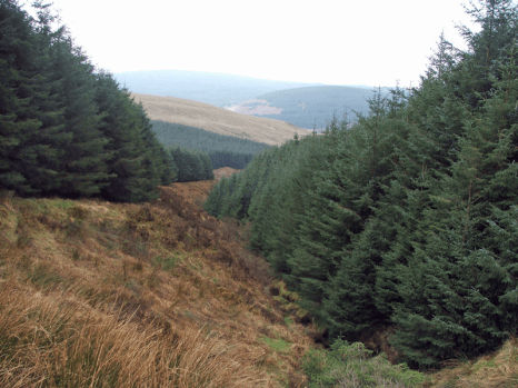 (Credit: Steve Partridge, from www.geograph.org.uk)