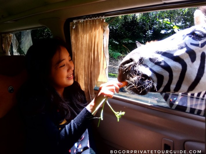 Feeding animals from inside the car.