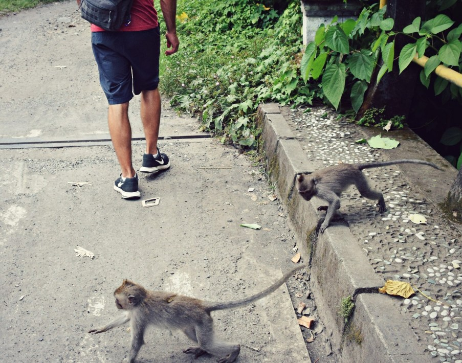 monkey crossing ubud monkey forest bali