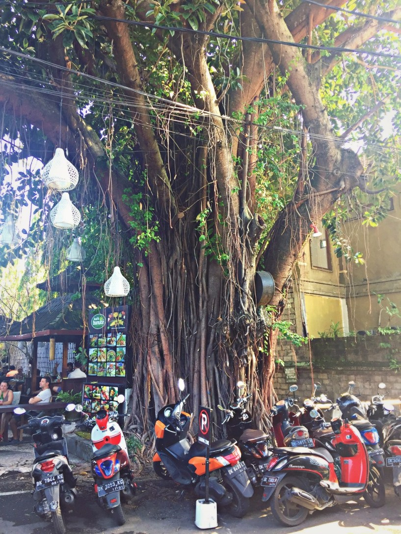 giant tree roots ubud bali