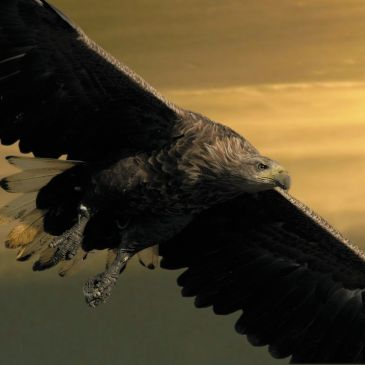 BIRDWATCHING IN KOPAČKI RIT NATURE PARK