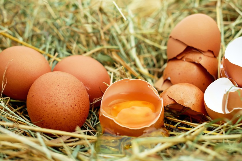 Grandmother always said that if an egg was too fresh you couldn't peel it; she was right but she never knew why, because it was not until the late 1950's that scientist began to discover the reason