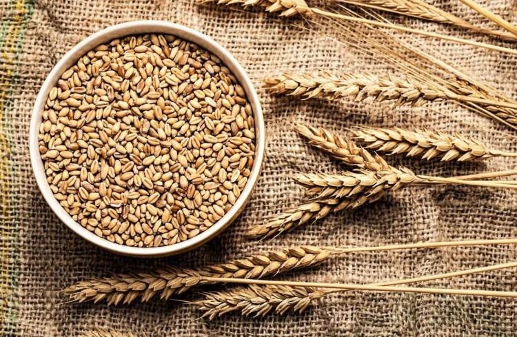 durum wheat and soft wheat