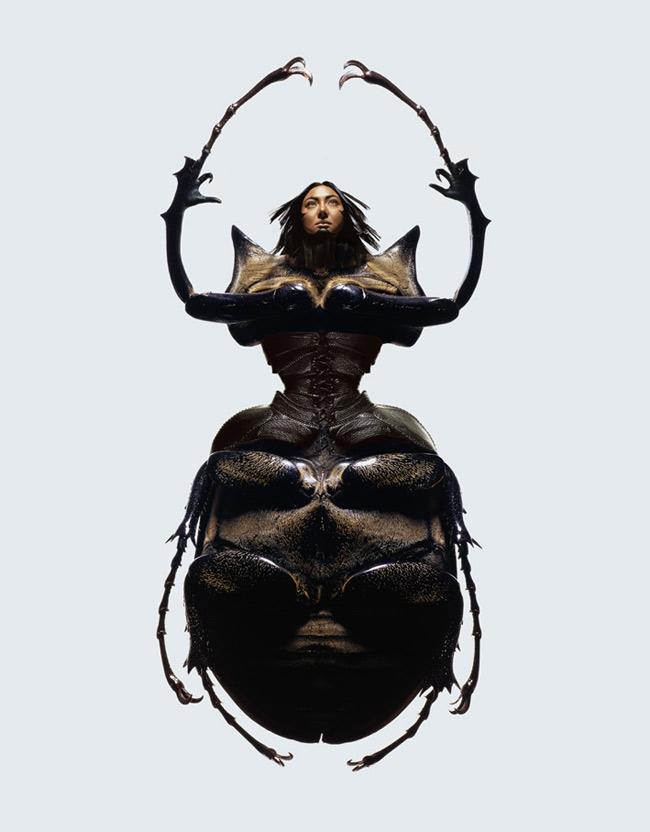 23_insectscarab