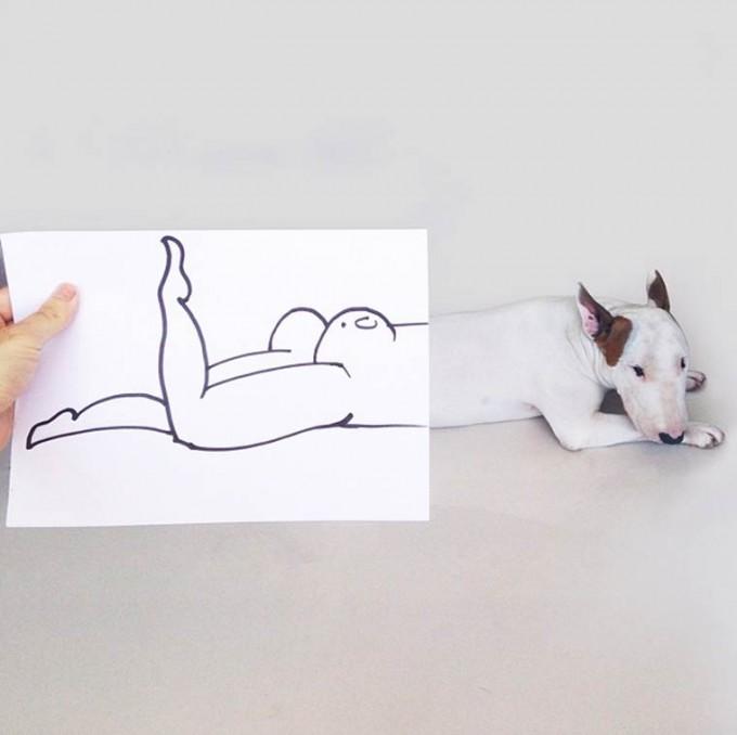 rafael-mantesso-bull-terrier-14