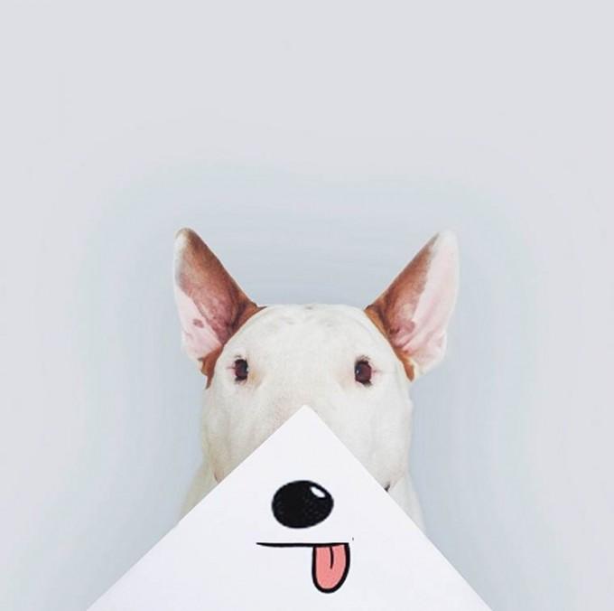 rafael-mantesso-bull-terrier-18