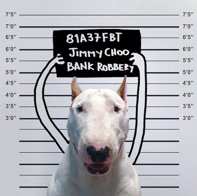 rafael-mantesso-bull-terrier-3