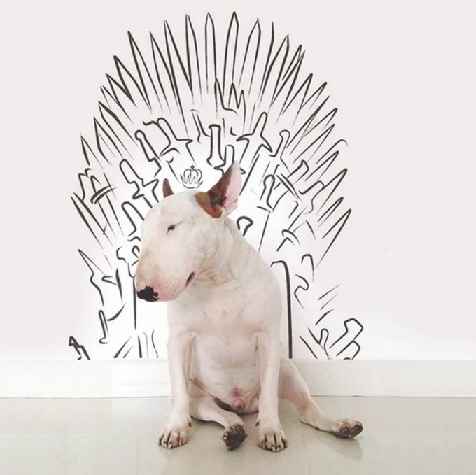 rafael-mantesso-bull-terrier-8