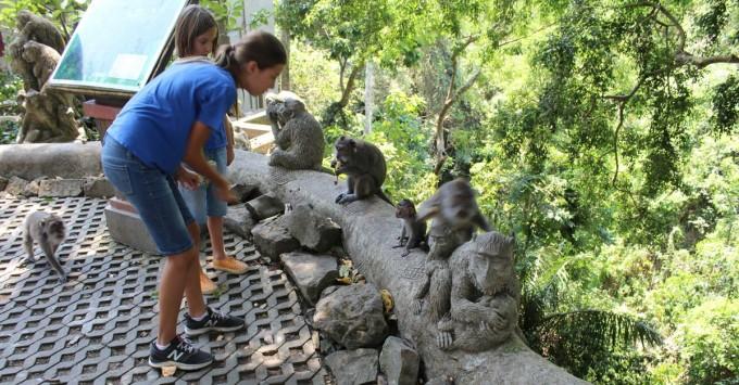 Feeding the monkeys.