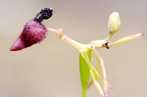 Photo courtesy of Biodivinf (cc)