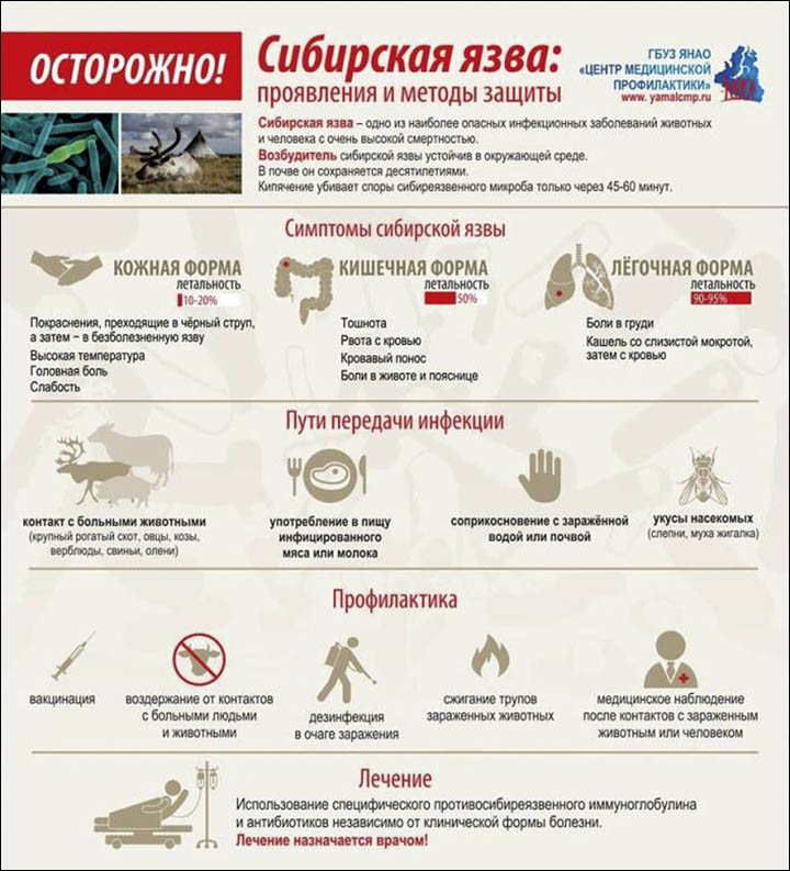 A warning message to the Yamal peninsula's reindeer herders, describing the symptoms of anthrax. Picture: Press Service of Yamalo-Nenetsk Governor's Office