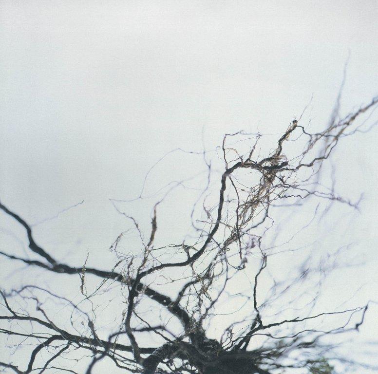 Music that inspired 1980s Japanese environmental music composer Yukata Hirose