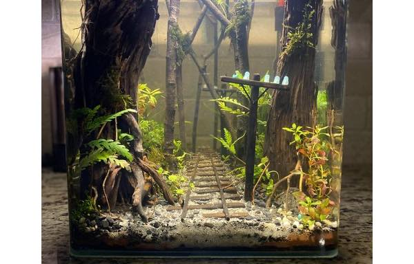Aquascape railroad is a very cool aquarium design project ...