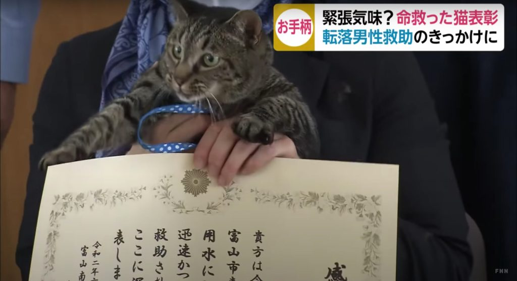 Officials honor hero cat who saved an old man trapped in a canal