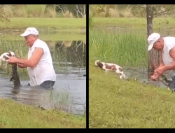 Florida man saves puppy from alligator