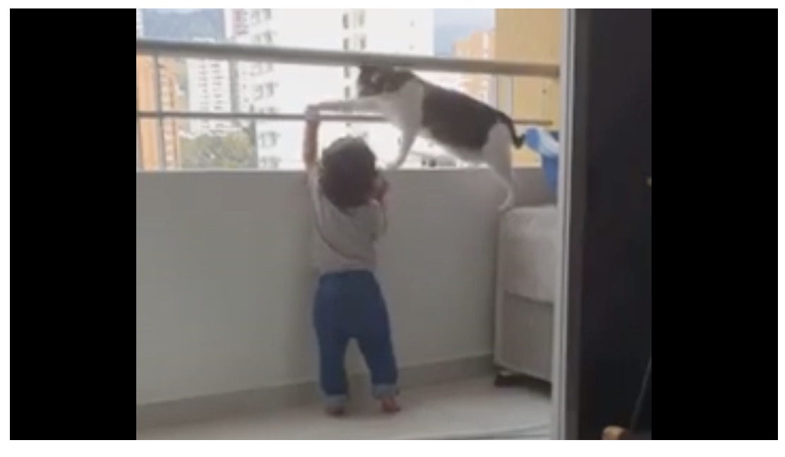 Cat won't allow young human to climb over balcony | Boing Boing