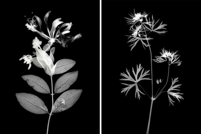 Photos of plants by William Arnold